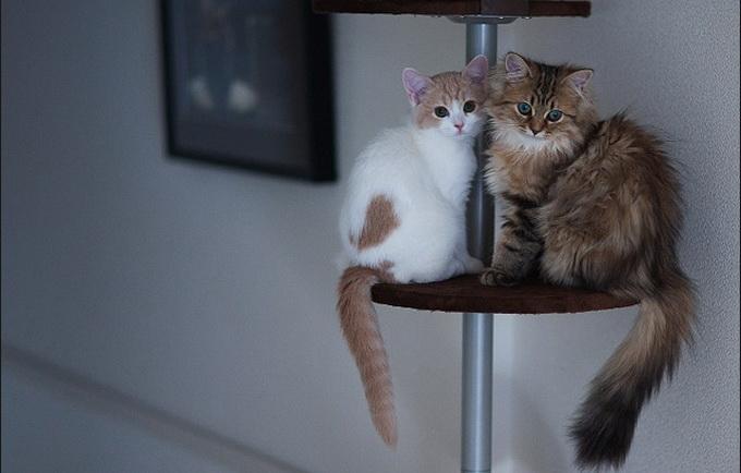 смешные котята фото 1 (680x434, 81Kb)
