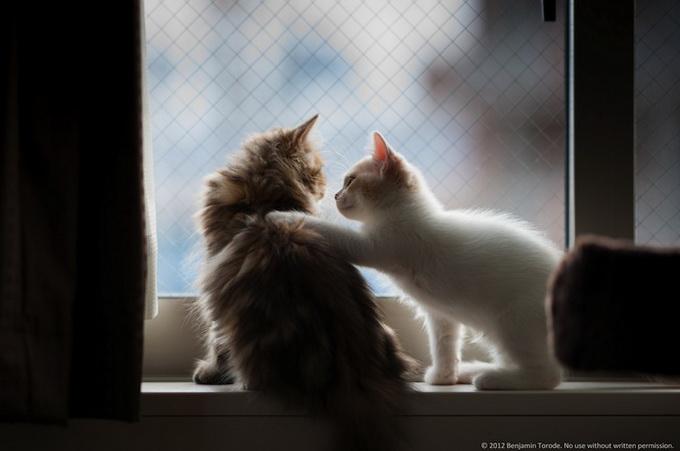 смешные котята фото 3 (680x451, 65Kb)