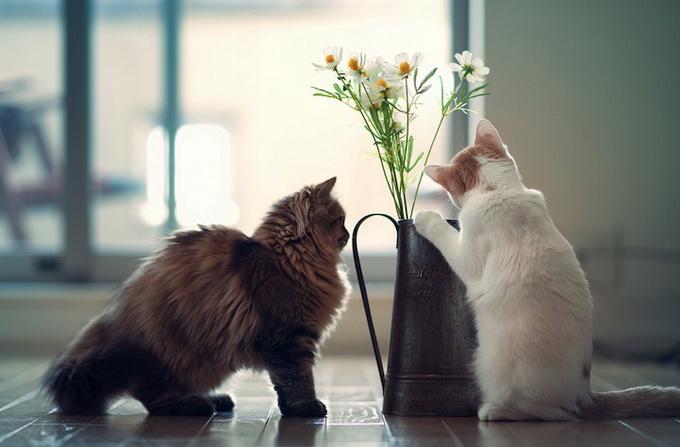 смешные котята фото 5 (680x447, 82Kb)