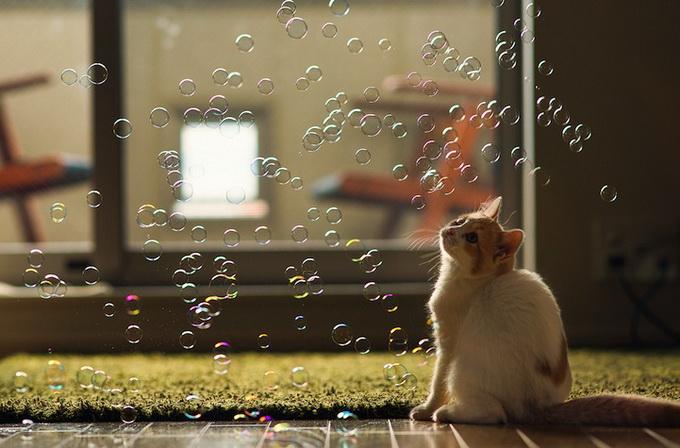 смешные котята фото 7 (680x448, 109Kb)