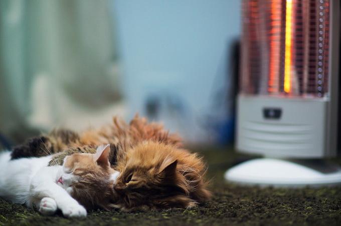 смешные котята фото 9 (680x451, 81Kb)