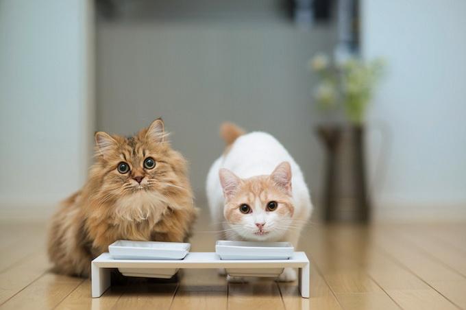 смешные котята фото 11 (680x452, 64Kb)