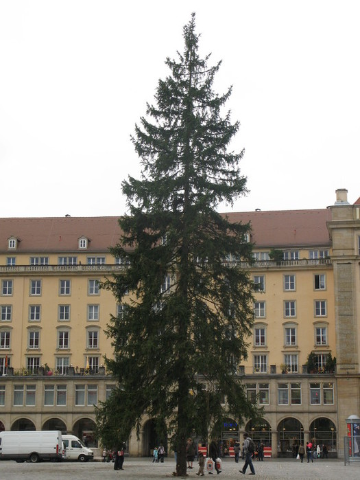 Больная рождественская ёлка Дрездена. 96336