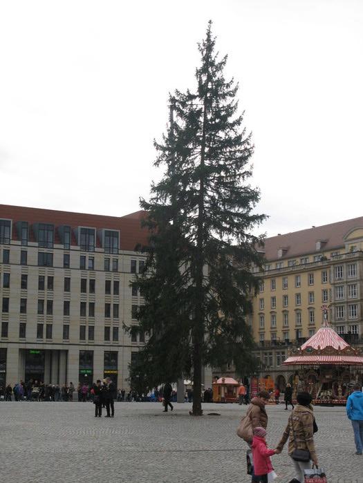 Больная рождественская ёлка Дрездена. 34020