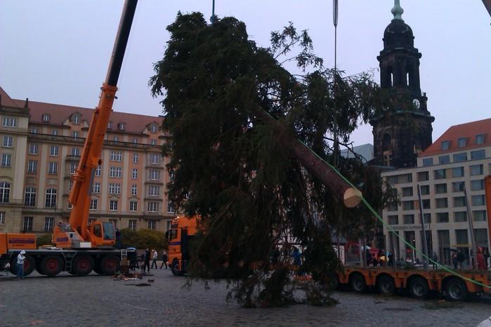 Больная рождественская ёлка Дрездена. 20811