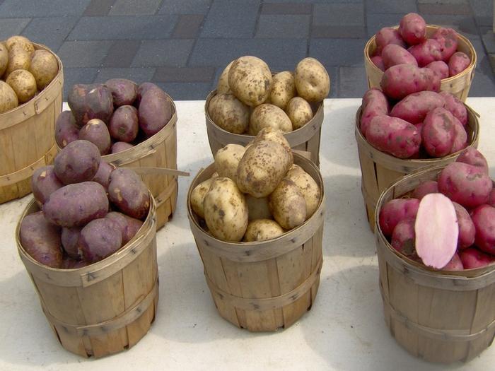 4572018_potato (700x525, 212Kb)
