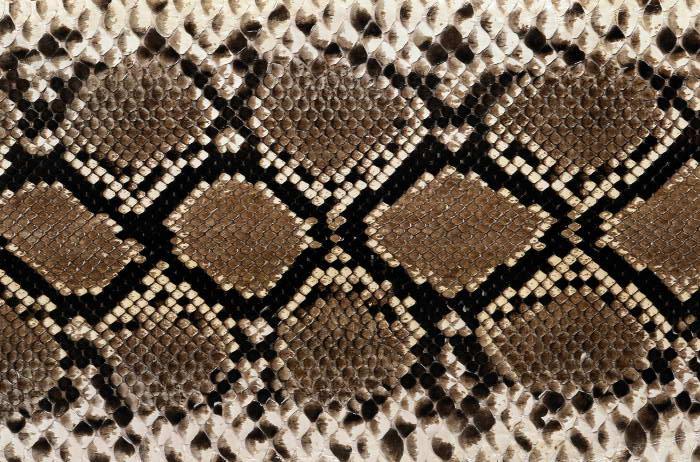 Reptile skin textures (14) (700x462, 111Kb)