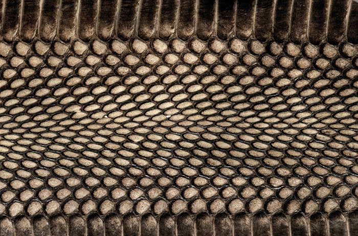 Reptile skin textures (16) (700x462, 105Kb)