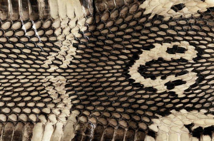 Reptile skin textures (21) (700x462, 98Kb)