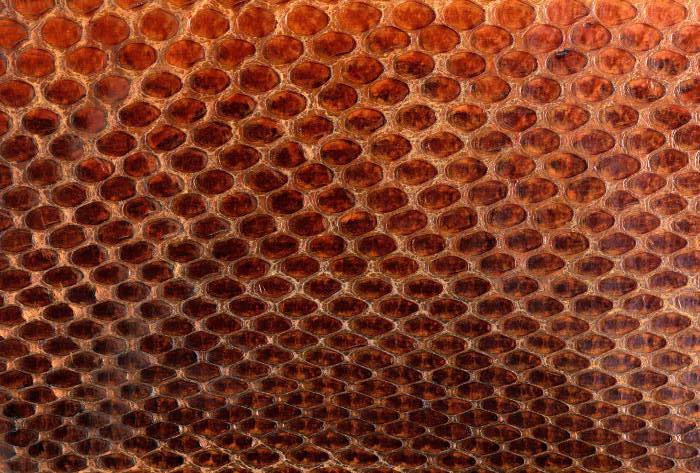 Reptile skin textures (23) (700x473, 96Kb)