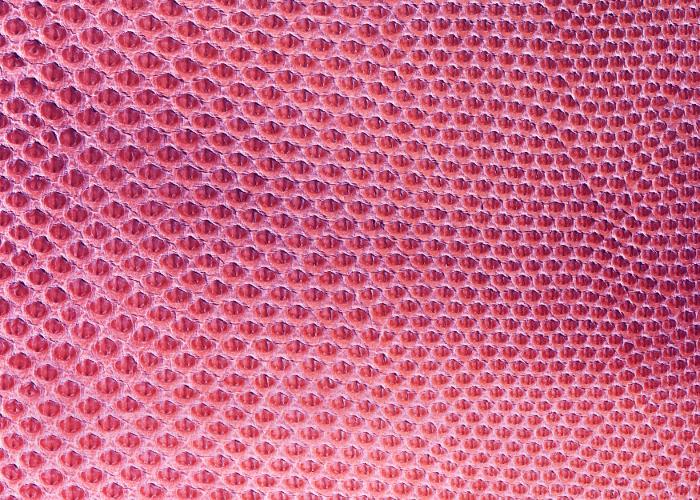Reptile skin textures (46) (700x500, 640Kb)