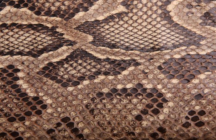 Reptile skin textures (66) (700x456, 321Kb)