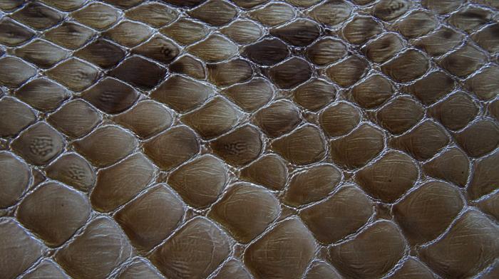 Reptile skin textures (70) (700x392, 437Kb)