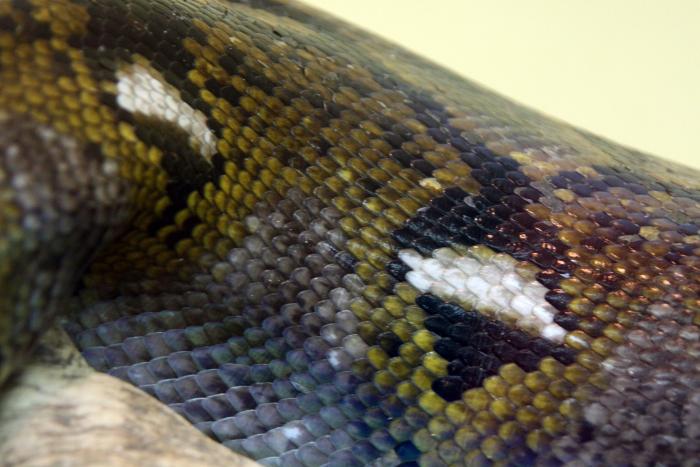Reptile skin textures (80) (700x467, 392Kb)