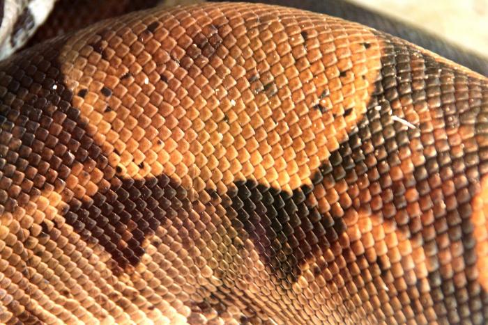 Reptile skin textures (82) (700x467, 529Kb)