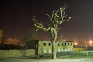 Оригинал 1а tree (307x205, 49Kb)