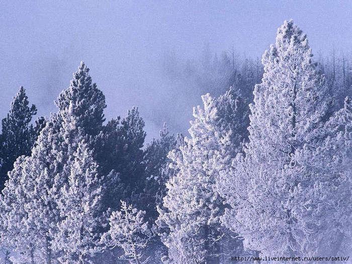Картинки зима скачать бесплатно 10