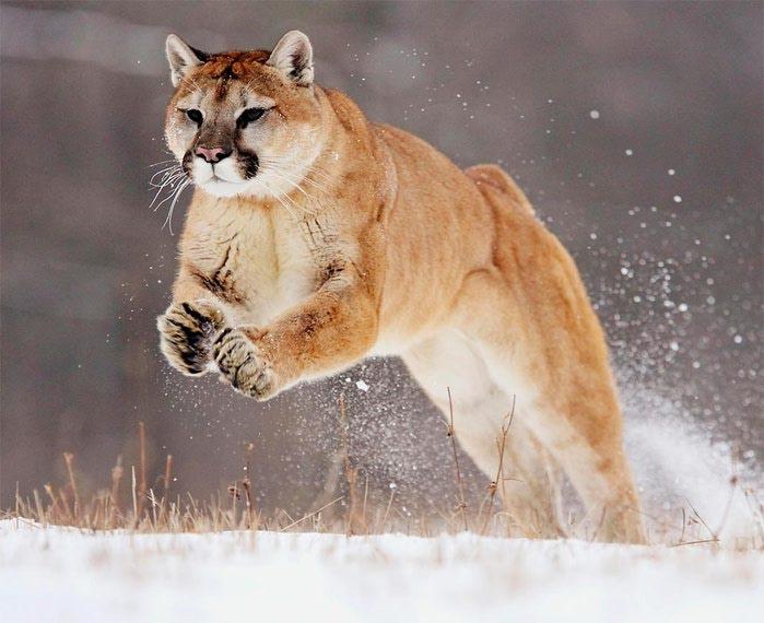 Животные зимой фото