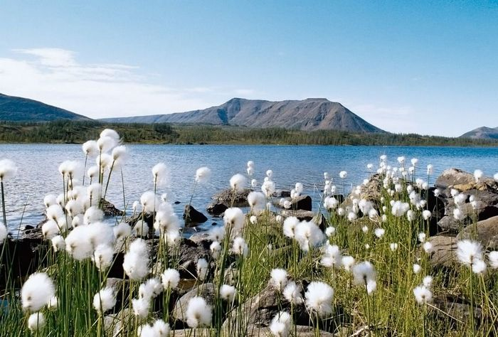 Плато Путорана и озеро Лама Непутевые заметки