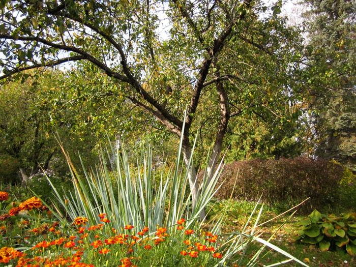 Сад Паустовского 2 (700x525, 243Kb)