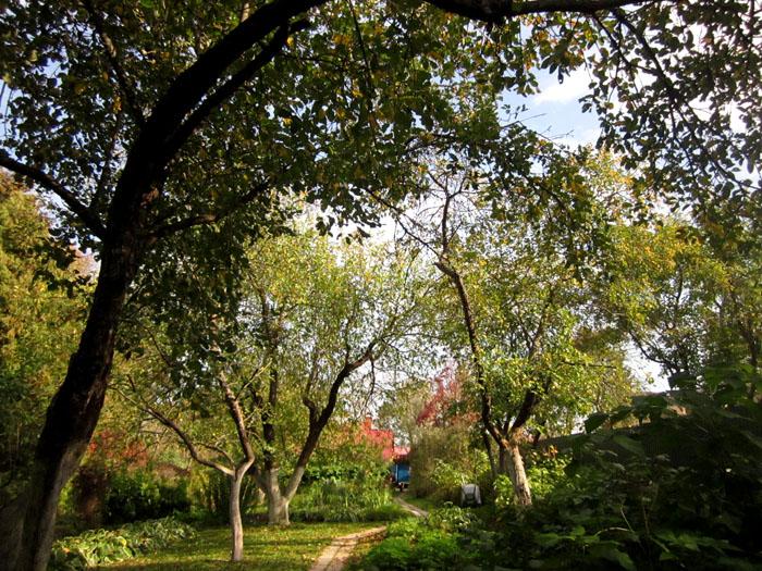 Сад Паустовского 4 (700x525, 229Kb)