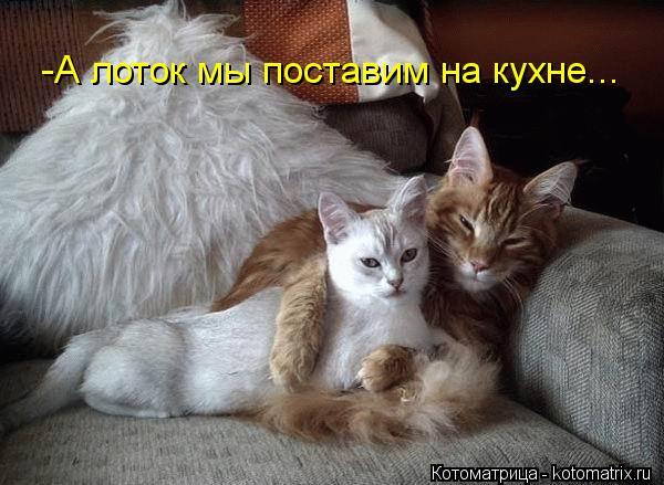 kotomatritsa_fQ (600x439, 51Kb)