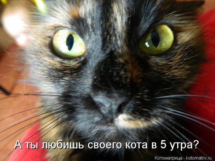 kotomatritsa_7s (700x524, 60Kb)