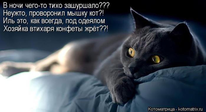 kotomatritsa_BJ (700x382, 34Kb)