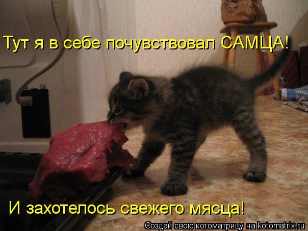 kotomatritsa_qo (604x453, 48Kb)