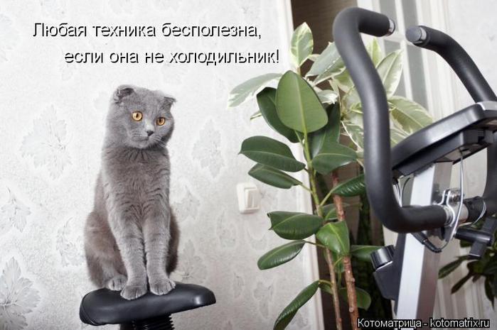 kotomatritsa_TQ (700x465, 51Kb)