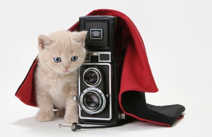 4979645_cats_01 (700x453, 30Kb)