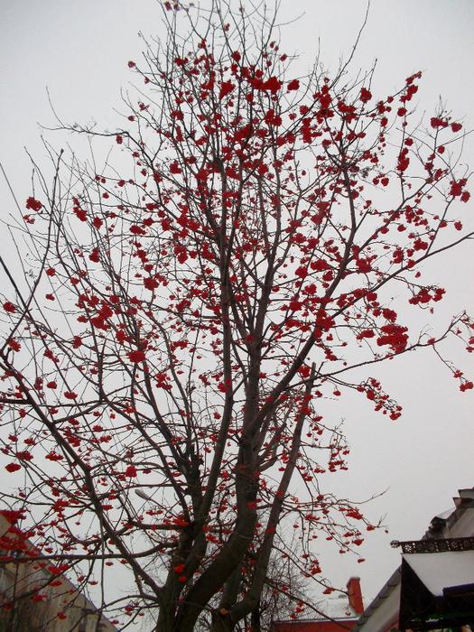 2 зимняя рябина, зима картинки (525x700, 589Kb)