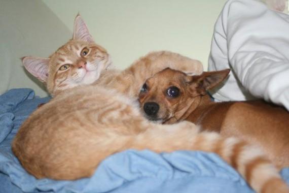 умная кошка (570x380, 39Kb)