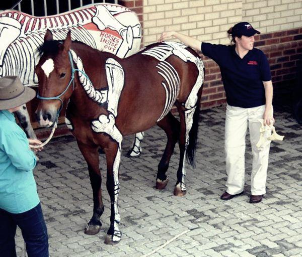 Horses Inside Out Лошади наизнанку. Живой проект Джиллиан Хиггинс