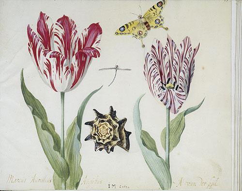 jacob-marrel-tulips (500x394, 51Kb)