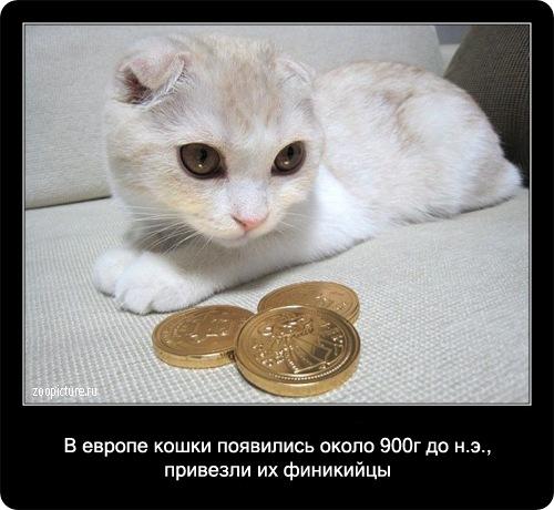 65000000 (500x460, 67Kb)