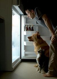 ремонт холодильников (200x275, 14Kb)