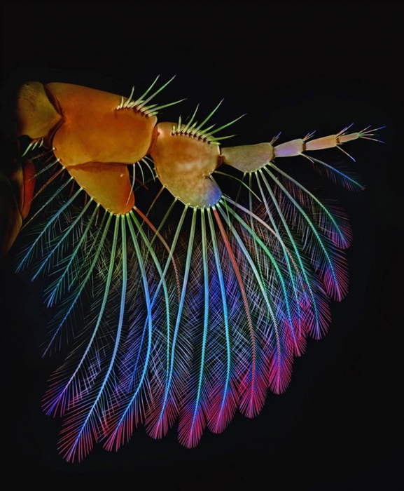 макрофото Olympus BioScapes Imaging Competition 2012 10 (577x700, 270Kb)