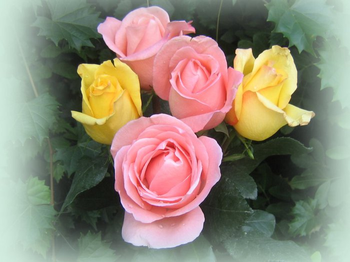 roses_bouquet_3571 (700x525, 55Kb)