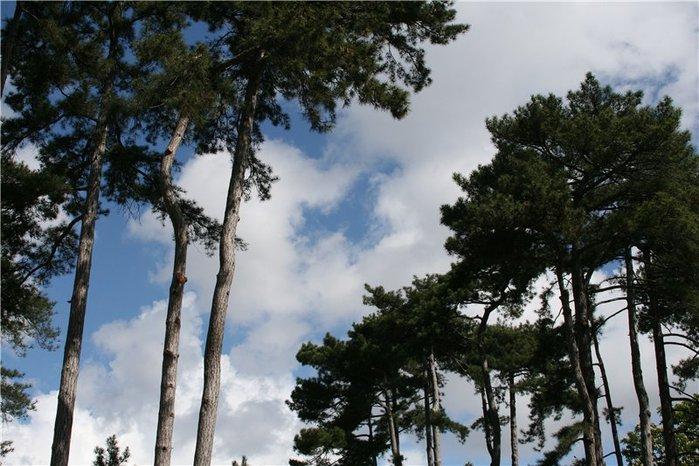 Bois de Boulogne1 (700x466, 87Kb)