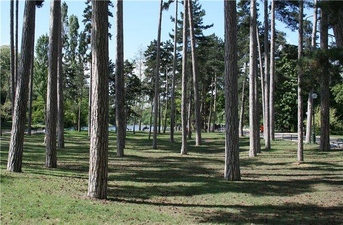 Bois de Boulogne5 (700x460, 126Kb)