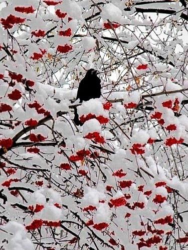 Ах, зима, зима... 53797