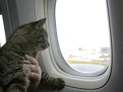 cat-on-plane (400x300, 10Kb)