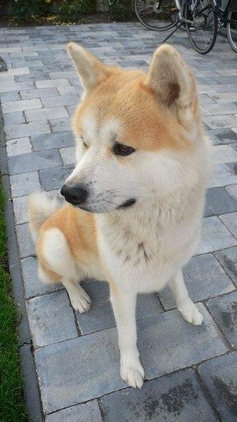 собака6 (340x604, 51Kb)