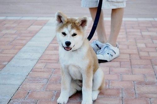 собака3 (500x334, 33Kb)