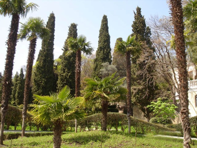 gurzuf-park (640x480, 129Kb)