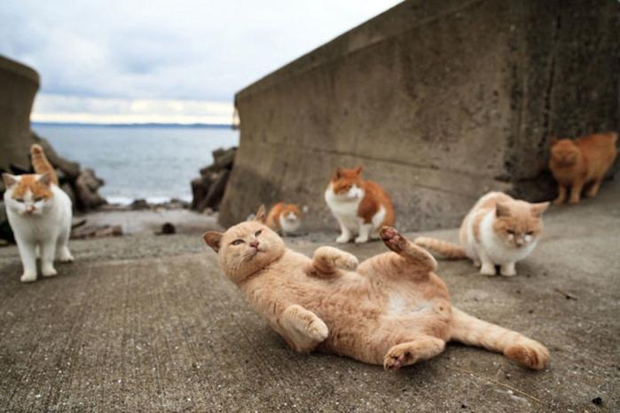 смешные кошки фото 4 (700x465, 92Kb)