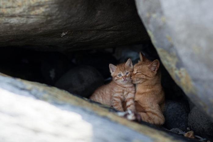 смешные кошки фото 6 (700x465, 62Kb)
