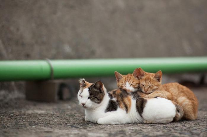 смешные кошки фото 8 (700x465, 68Kb)