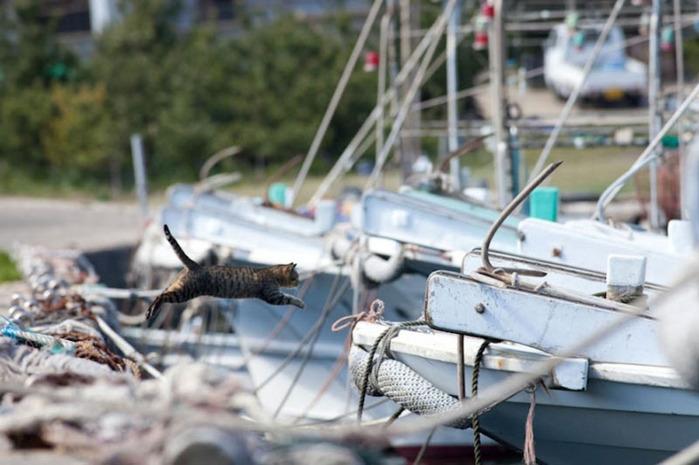 смешные кошки фото 10 (700x465, 100Kb)
